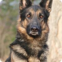 Adopt A Pet :: Zander - Nashville, TN