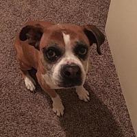 Adopt A Pet :: Jewel - Plant City, FL