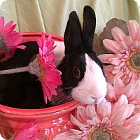 Adopt A Pet :: Oreo - Warwick, NY