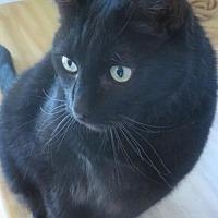 Adopt A Pet :: Sirius - Plymouth, MN