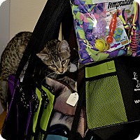 Adopt A Pet :: Katie - Medina, OH