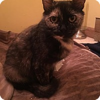 Adopt A Pet :: Fiona - Hudson, NY