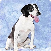 Adopt A Pet :: Missy - Cary, NC