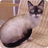 Adopt A Pet :: Samantha (Outgoing!) - Portland, OR
