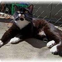 Adopt A Pet :: Oreo - Shelton, WA