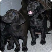 Adopt A Pet :: PUPPIES ! - Wakefield, RI