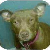 Adopt A Pet :: Nevaeh - Seattle, WA
