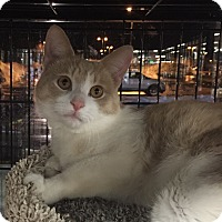 Adopt A Pet :: Bailey - Horsham, PA