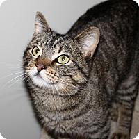 Adopt A Pet :: Millie - Nolensville, TN