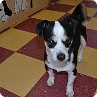 Adopt A Pet :: Tiny Tim - Tavares, FL