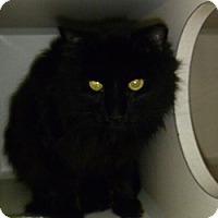 Adopt A Pet :: Puffy - Hamburg, NY