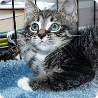 Adopt A Pet :: Danny - Stafford, VA