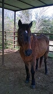 Quarterhorse Mix for adoption in Hitchcock, Texas - Ms. Vicky