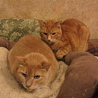 Adopt A Pet :: Rusty & Dagwood - Kingston, WA
