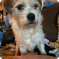 Adopt A Pet :: MELVIN - Chicago Heights, IL