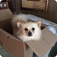 Adopt A Pet :: Tater Tot - Mandeville, LA