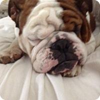 Adopt A Pet :: Brooklyn - Strongsville, OH