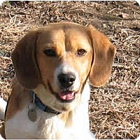 Adopt A Pet :: Patrick - Blairstown, NJ