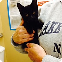 Adopt A Pet :: Scioto - Troy, OH