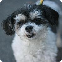 Adopt A Pet :: Daisy - Canoga Park, CA
