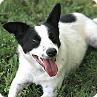 Adopt A Pet :: Dolly - Lufkin, TX