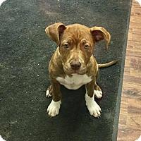 Adopt A Pet :: Esther - Xenia, OH