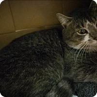 Adopt A Pet :: Bart - Sherwood, OR