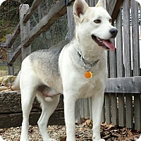 Adopt A Pet :: Sampson - Plainfield, CT