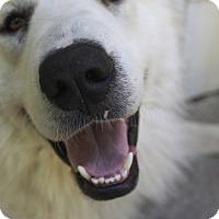 Adopt A Pet :: Hollis - Austin, TX