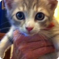 Adopt A Pet :: Tomasino - Lawrenceville, GA