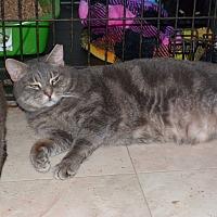 Adopt A Pet :: Wolfe - Stafford, VA
