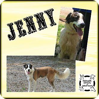 Anatolian Shepherd/Great Pyrenees Mix Dog for adoption in Jefferson, Georgia - Jenny