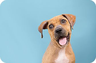 Terrier (Unknown Type, Medium) Mix Puppy for adoption in Hammond, Louisiana - Kiwi