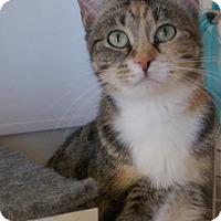 Adopt A Pet :: Dolly - Bridgeton, MO