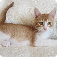 Adopt A Pet :: Dean - Hamilton, ON