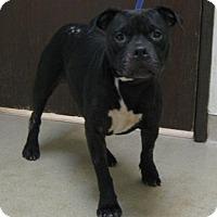 Adopt A Pet :: Douglas - Gary, IN