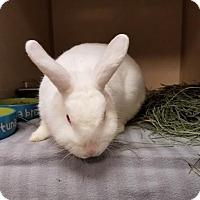 Adopt A Pet :: Chickory - Westminster, CA