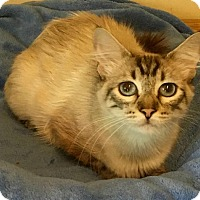 Adopt A Pet :: Peppermint Patty - Menifee, CA