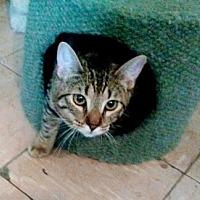 Adopt A Pet :: Candy 10-06-16 - Bulverde, TX