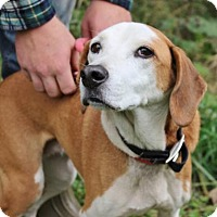 Adopt A Pet :: Holly - Hillsdale, IN