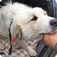 Adopt A Pet :: Hunter in NY - new! - Beacon, NY