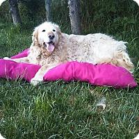 Adopt A Pet :: Eleanor - Washington, DC
