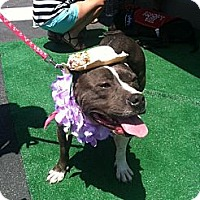 Adopt A Pet :: Hula - Santa Monica, CA