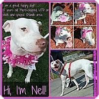 Adopt A Pet :: Nell - Orlando, FL