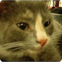 Adopt A Pet :: Chyna - Riverside, RI