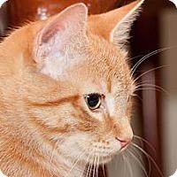 Adopt A Pet :: Tang - Alexandria, VA