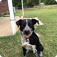 Adopt A Pet :: Duchess - Greenville, RI