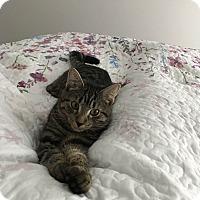 Adopt A Pet :: Ziggy_Courtesy Post - Columbia, MD