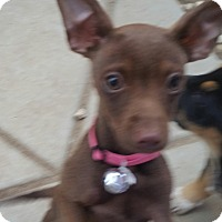 Adopt A Pet :: Bella - temecula, CA