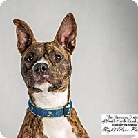 Adopt A Pet :: Axel - North Myrtle Beach, SC